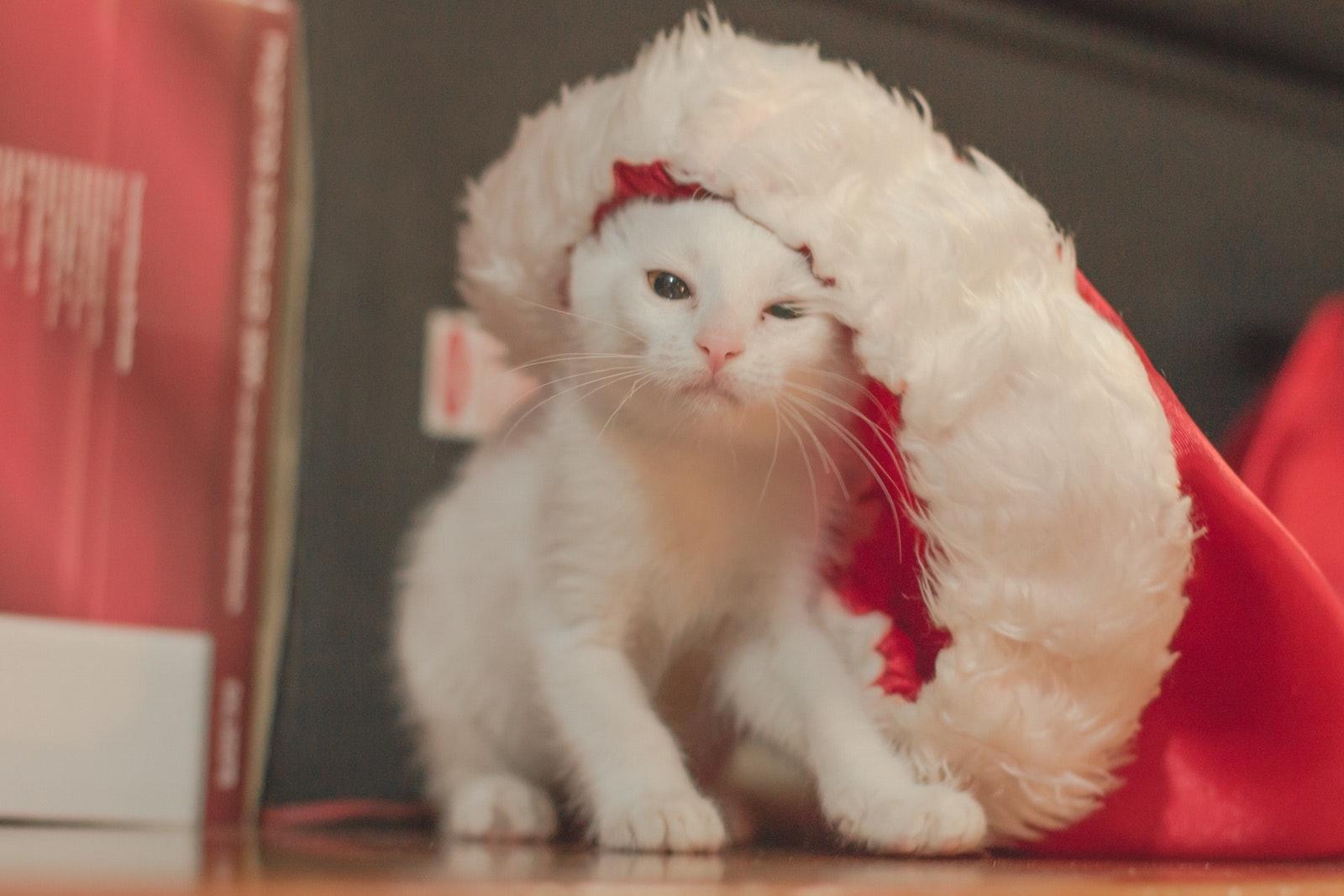 Joululoman tarpeessa? Katso 10 merkkiä